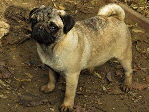 Summer-Dog Cáno X Summer-Dog Gogo Summer-Dog Cáno X Summer-Dog Gogo   Summer-Dog Cáno X Summer-Dog Gogo Summer-Dog Cáno X Summer-Dog Gogo