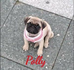 Polly Polly   Polly Polly