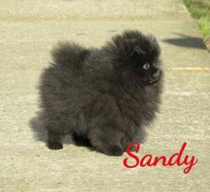 Sandy Sandy   Sandy Sandy