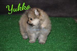 Yukko-Magic & Vini Yukko-Magic & Vini   Yukko-Magic & Vini Yukko-Magic & Vini